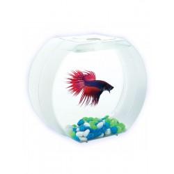 AA-Aquariums Betta О для мальчиков