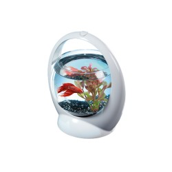 Tetra Betta Ring