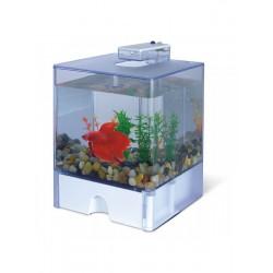AA-Aquariums 1515 Aqua Box Betta
