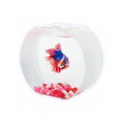 AA-Aquariums Betta О для девочек